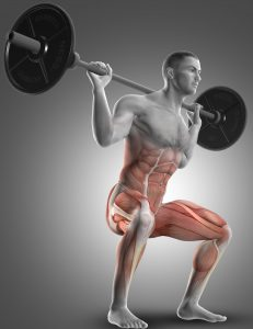 3D render of a male figure in a barbell squat highlighting the muscles used
