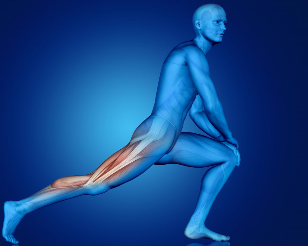 3D male figure in stretching pose with partial muscle map