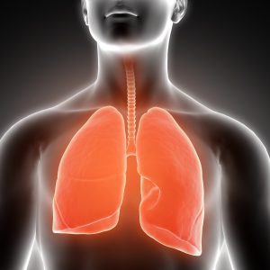 3D render of a medical male figure with lungs highlighted